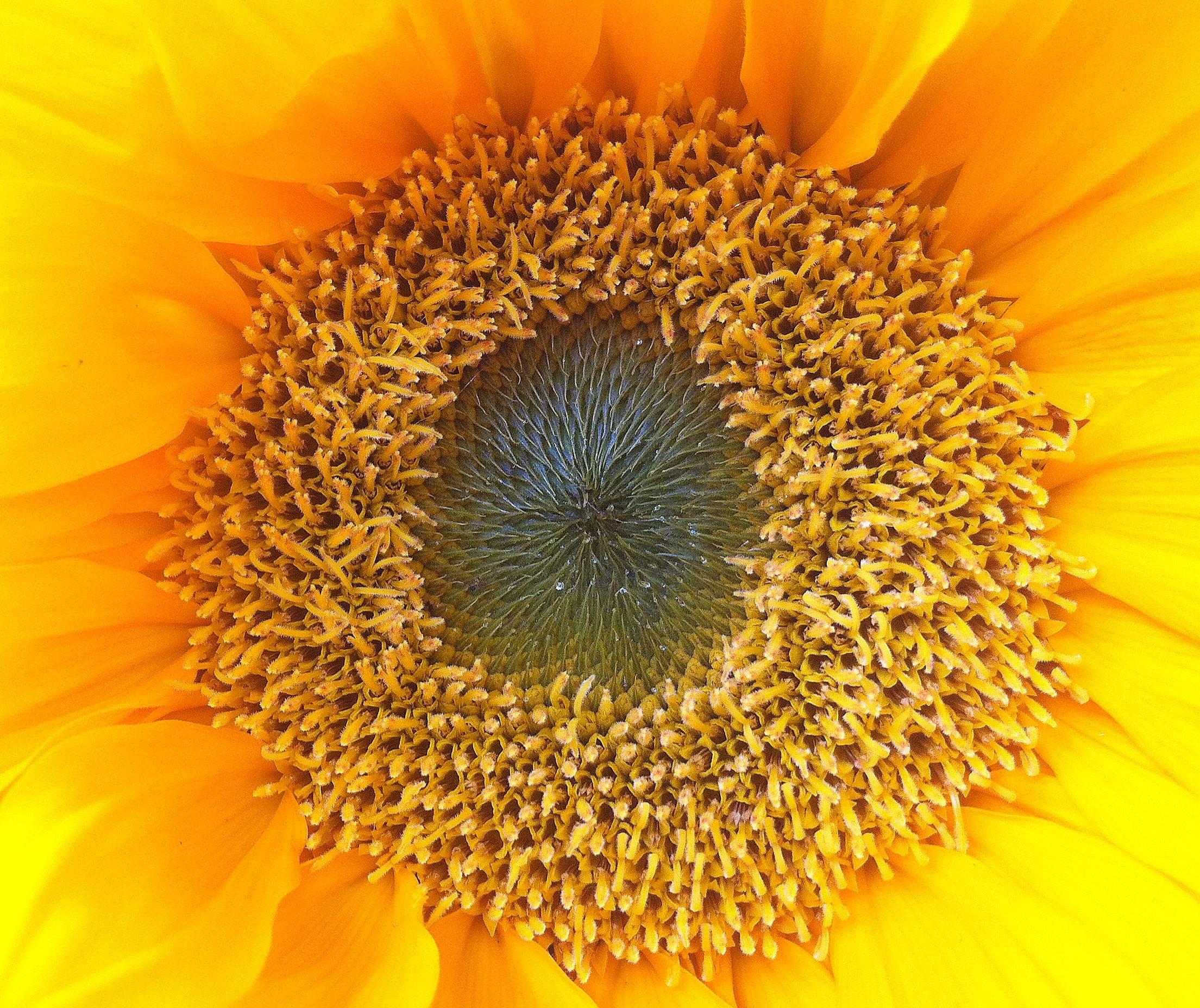 The magic of summer solstice