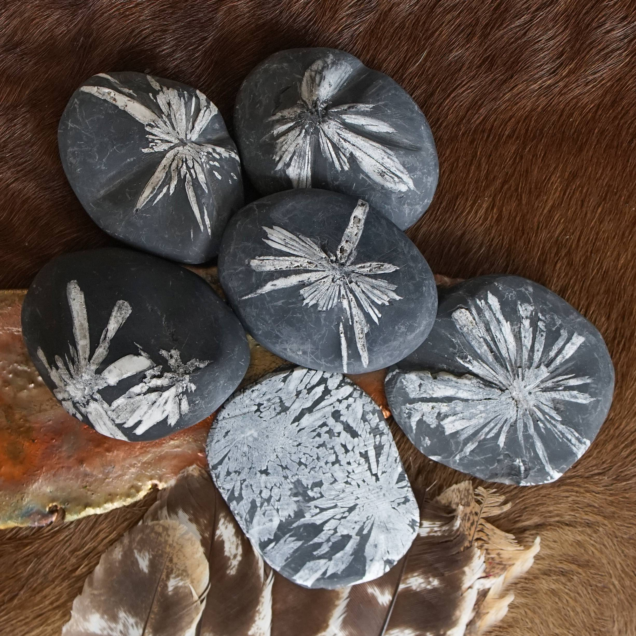 chrysanthemum palm stones