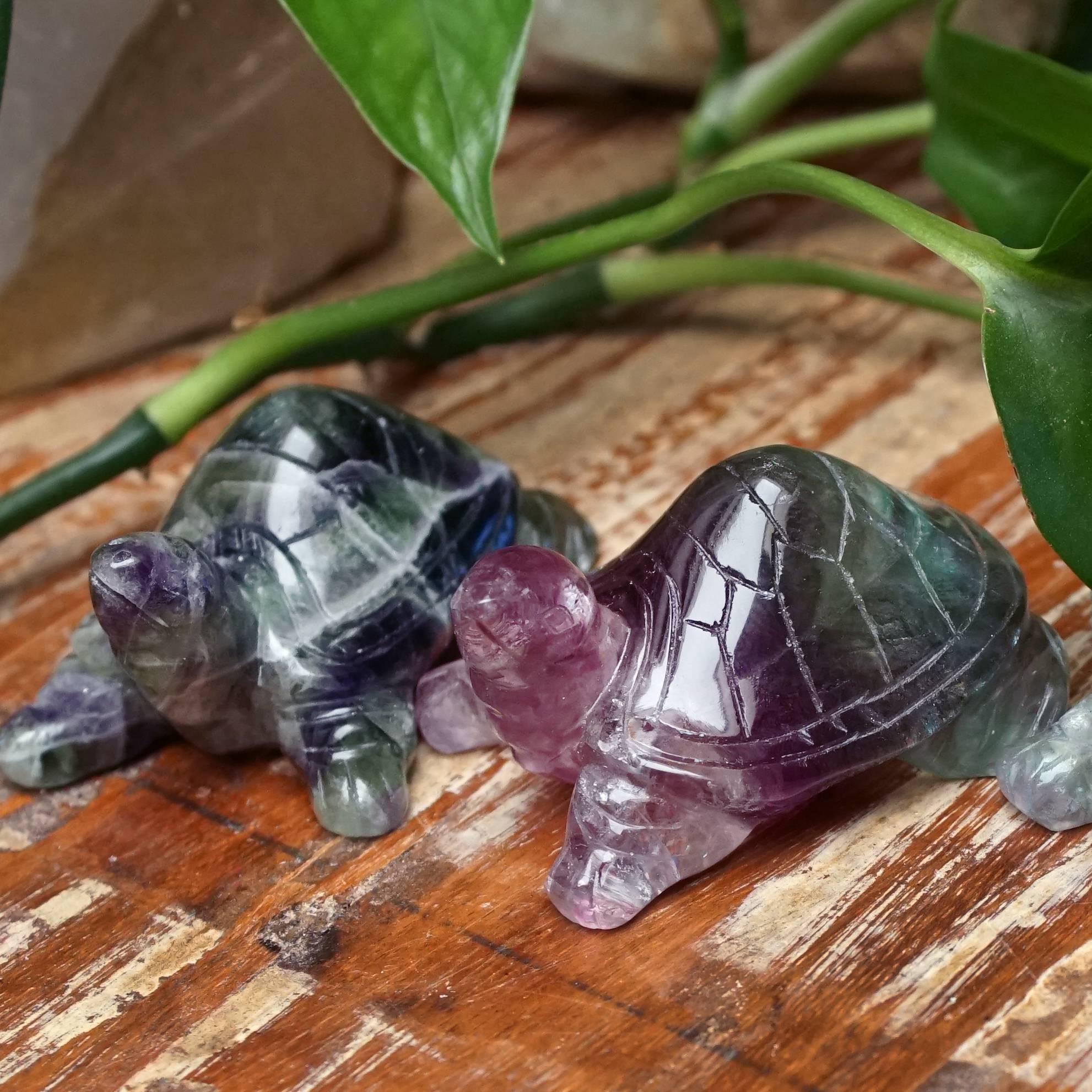 fluorite turtles
