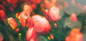 Imbolc and My Favorite Springtime Holiday Traditions