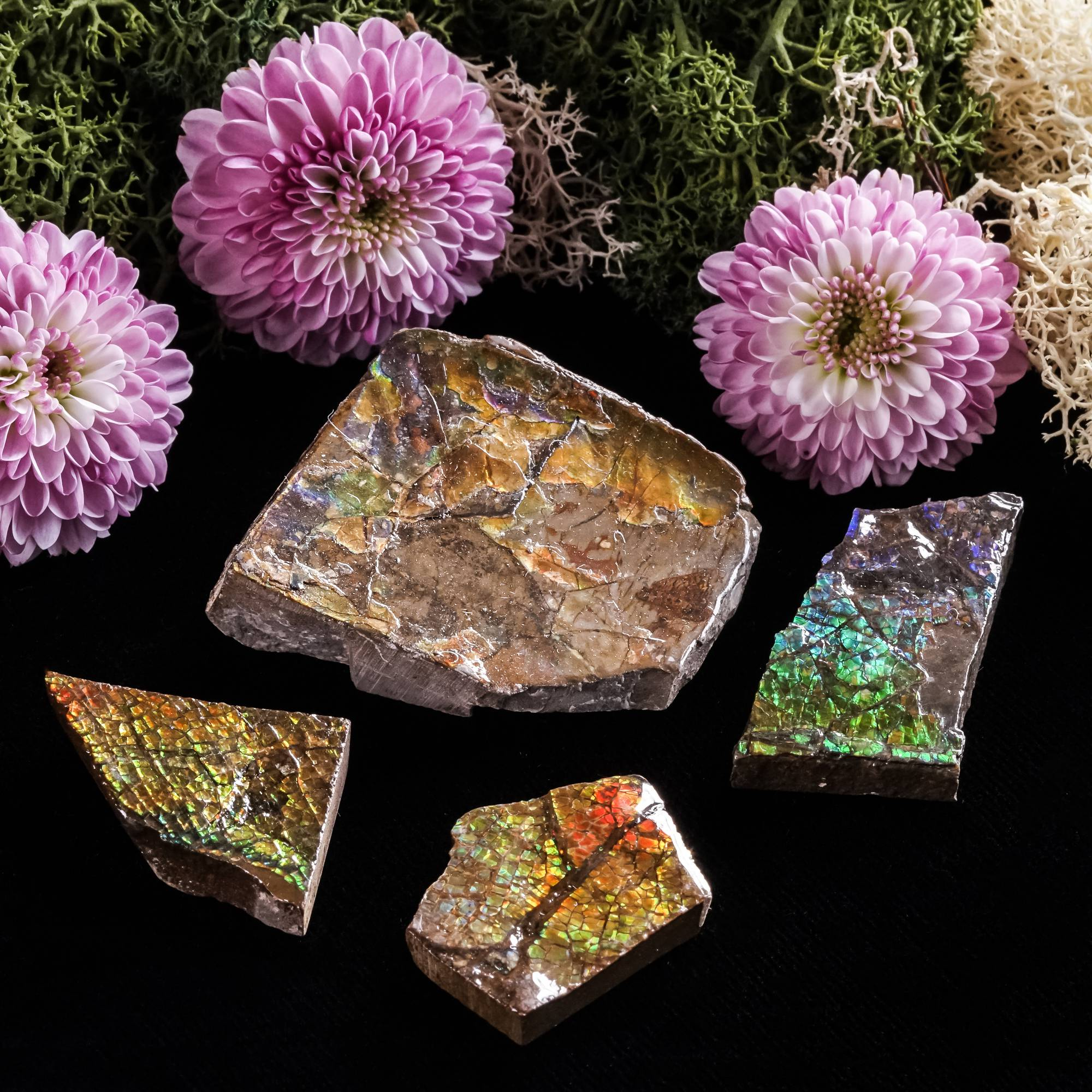 Rainbow Ammolite