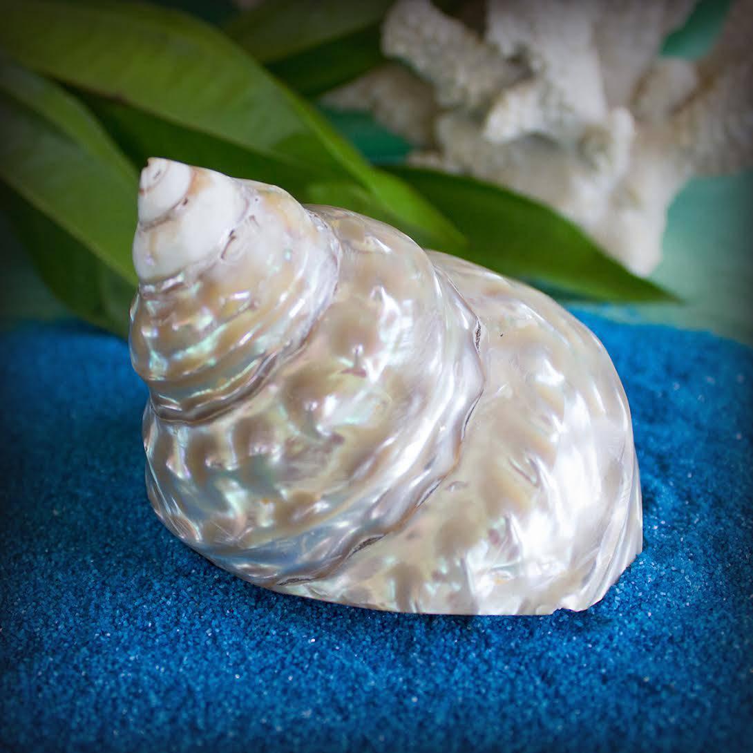 golden goddess shells