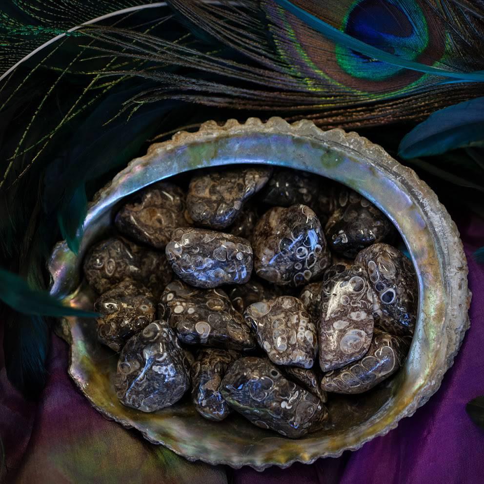 Tumbled Turritella Agate
