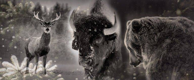Animal Medicine Spotlight: Spirit Creatures of the North