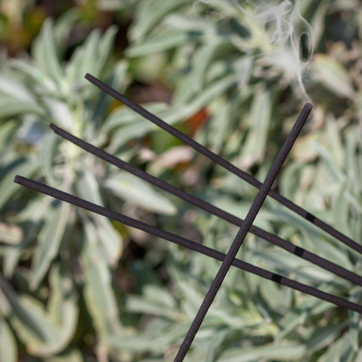 White Sage Incense Sticks 12_30