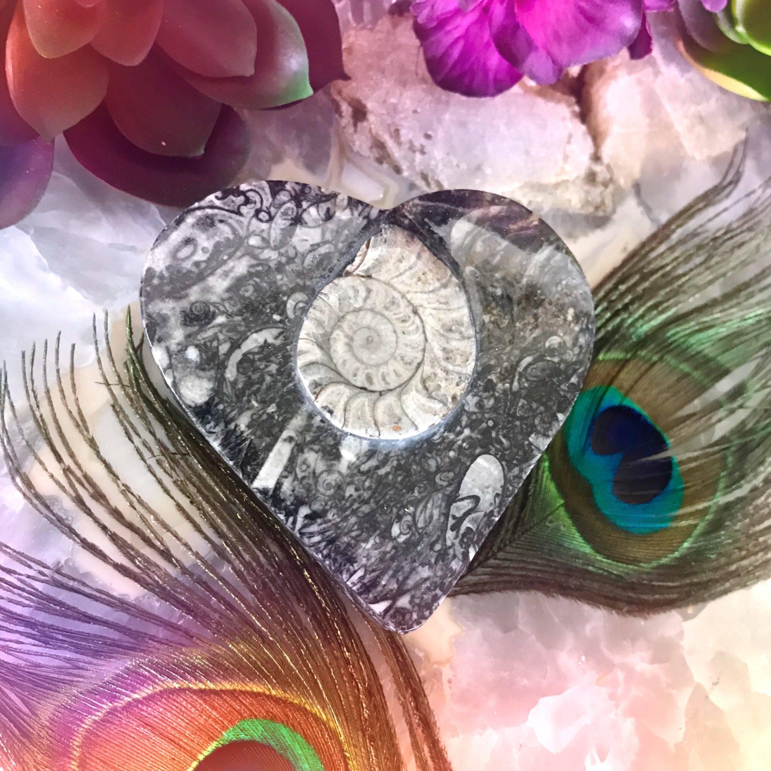 Sacred_Spiral_Orthoceras_Box_3of4_8_3