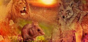 Animal Medicine Spotlight: Spirit Creatures of the South