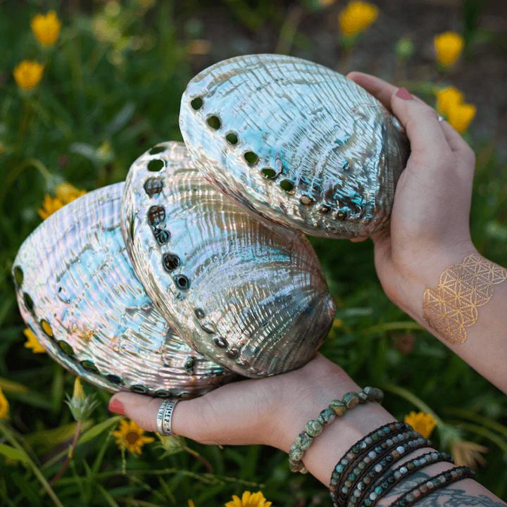 polished abalone