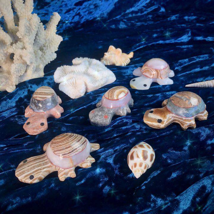 Intuitive_Aragonite_Turtles_1of3_4_1