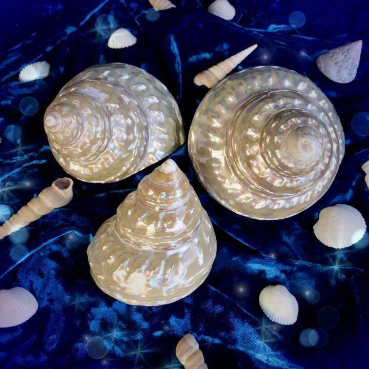 Sacred_Spiral_Goddess_Shells_DD_3of3_1_22