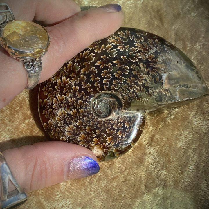 Ancient_Ammonite_DD-2of5_3_27.JPG