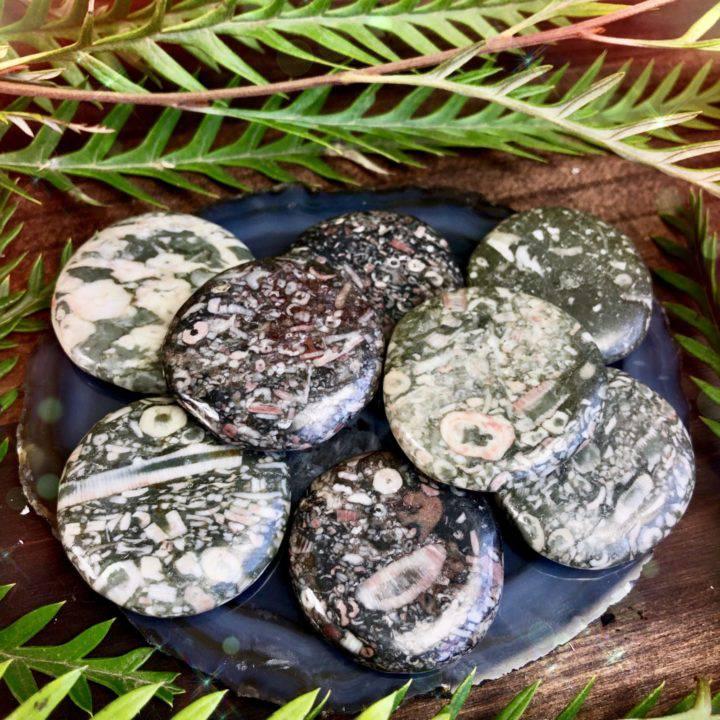 Shell_Fossil_Jasper_Palm_Stone_4of4_5_24