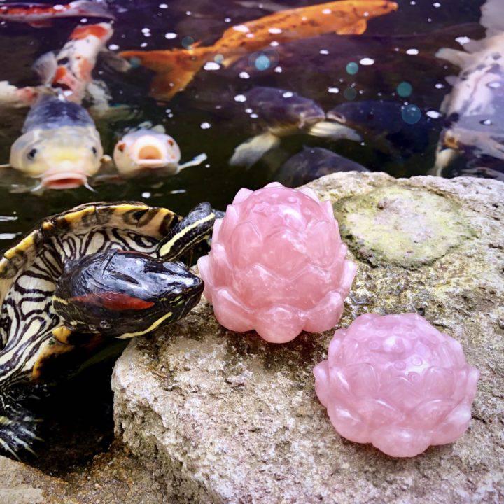 Buddha's_Love_Rose_Quartz_Lotuses_DD_4of5_8_2