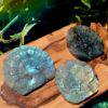 Ignite Your Desires Labradorite Peacocks_8_9_2of3