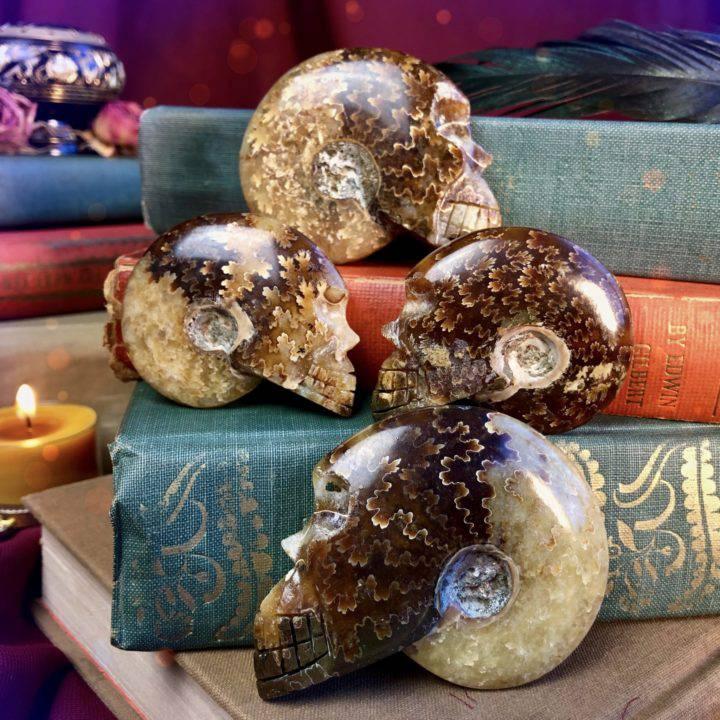 Ancient_Ammonite_Skulls_DD_1of5_9_16