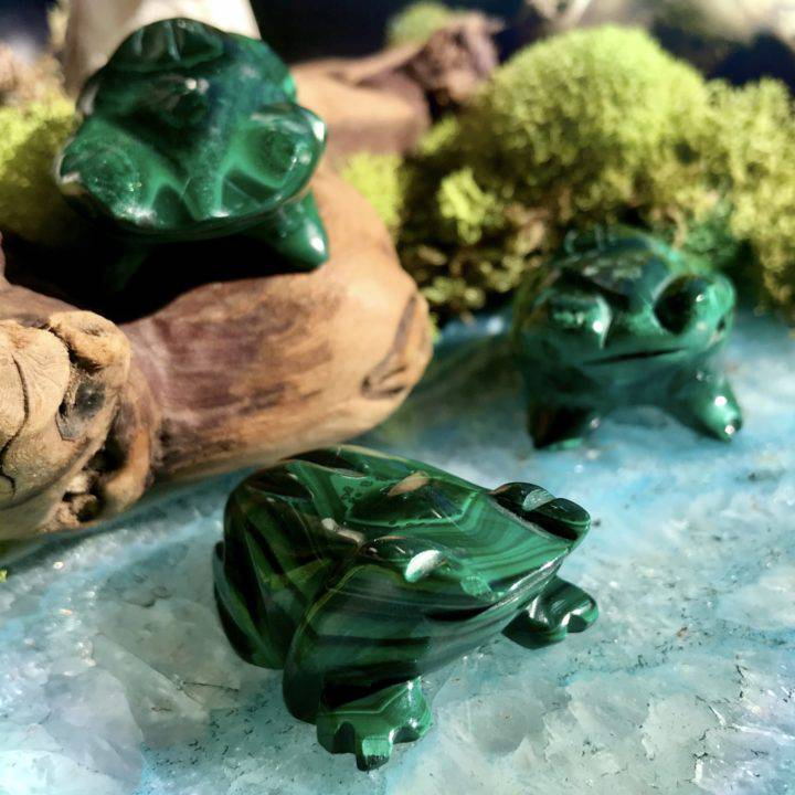 Malachite Frogs