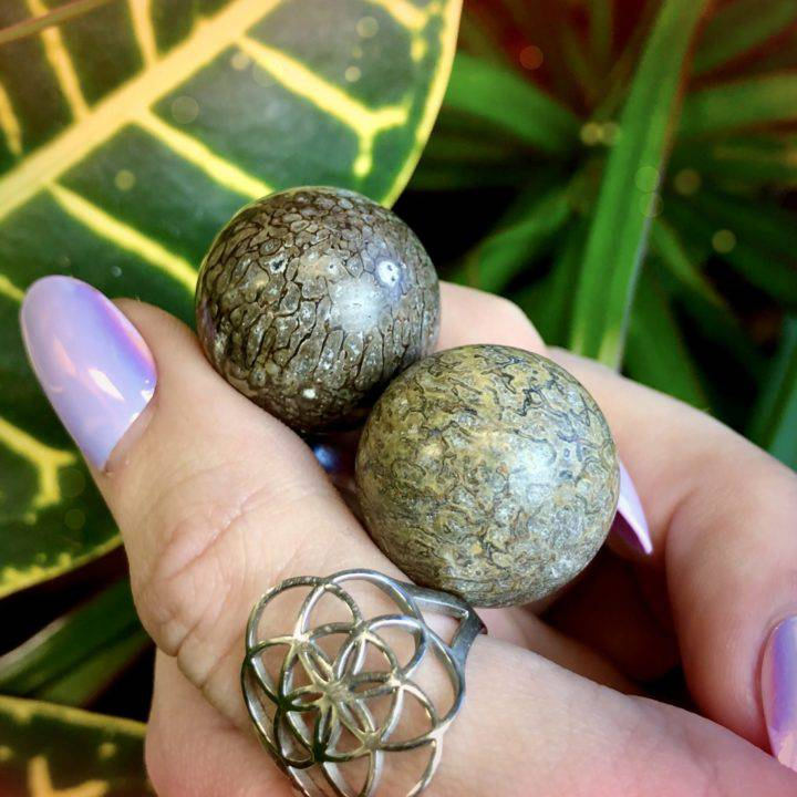 Ancient Wisdom Dino Fossil Spheres Duo