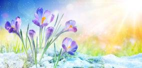 Imbolc Prepares Us for the Magic of Spring