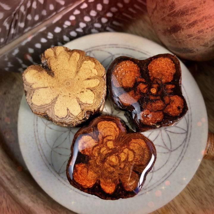 Shamanic Journey Spirit Vine Flowers