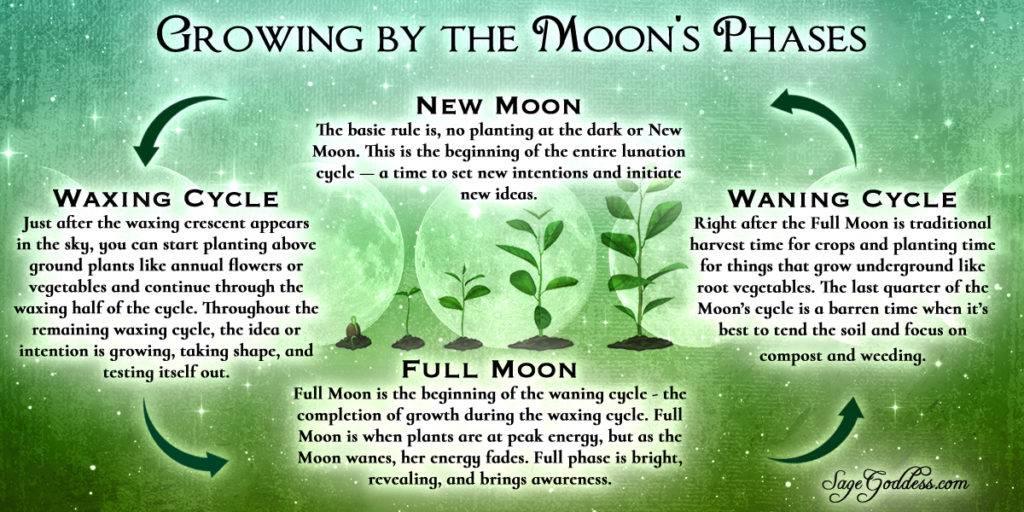 Growing by the Moon's Phases