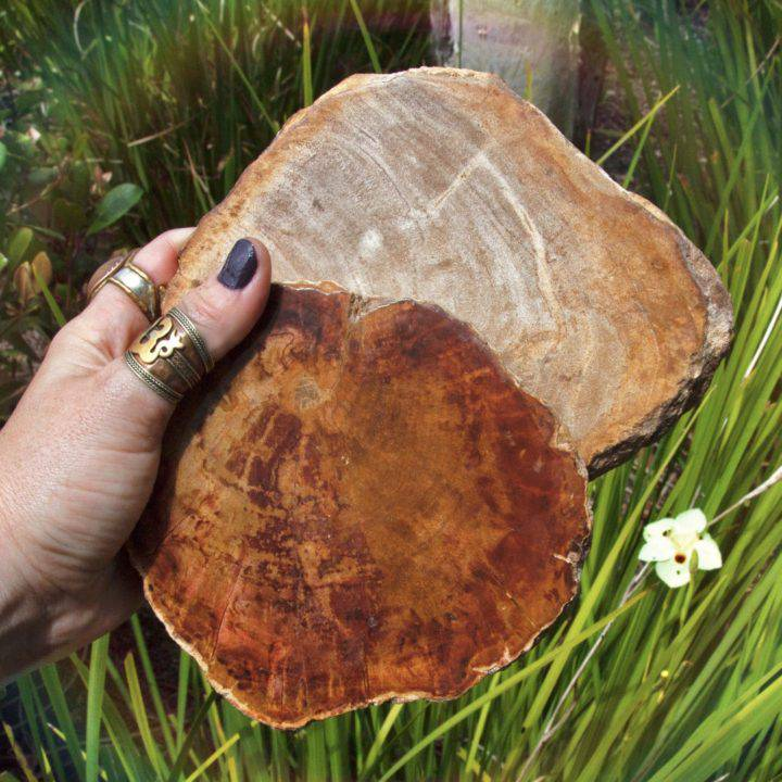 Petrified Wood Ancestral Wisdom Charging Plates