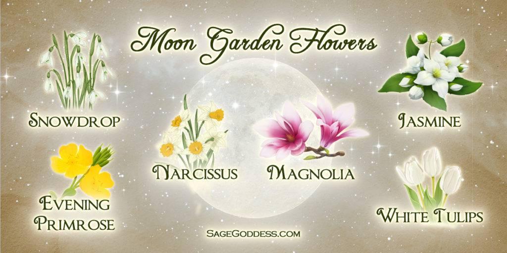 Magical Moon Gardens