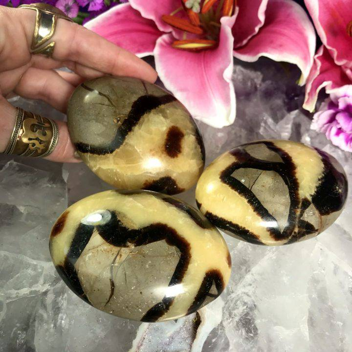 Septarian Palm Stones
