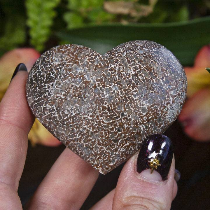 Dinosaur Bone Hearts