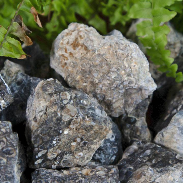 Natural Turritella Agate