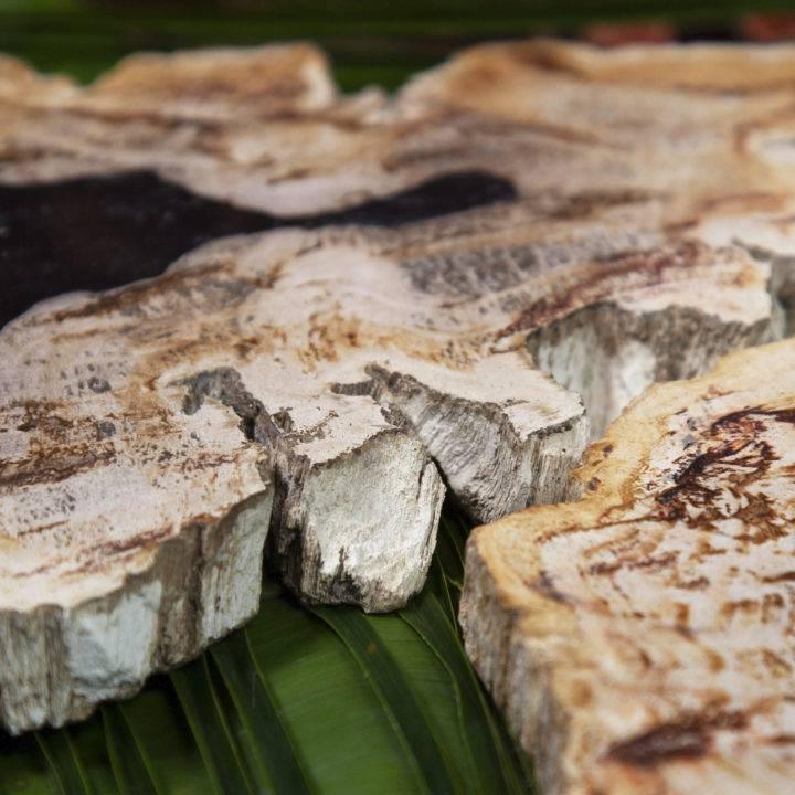 Petrified Wood Earth Wisdom Slices