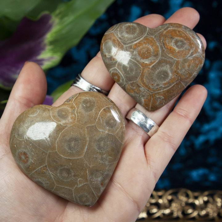Fossilized Coral Heart