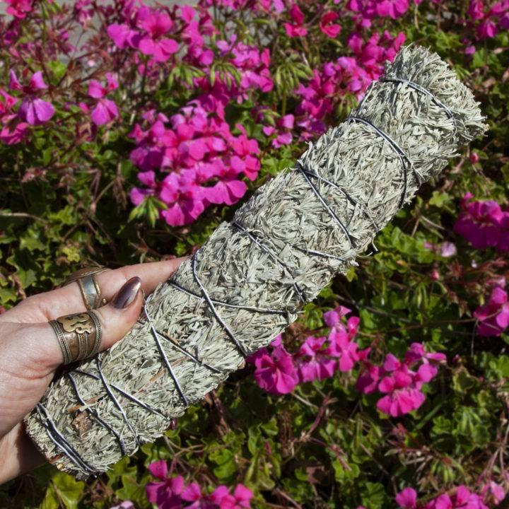Large Shasta Sage Smudge Bundles