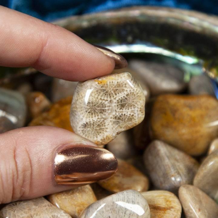 Tumbled Agatized Coral