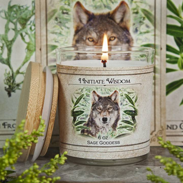 New Moon Enchanted Plant Wisdom: Olive Leaf and Resinoid Oakmoss Set