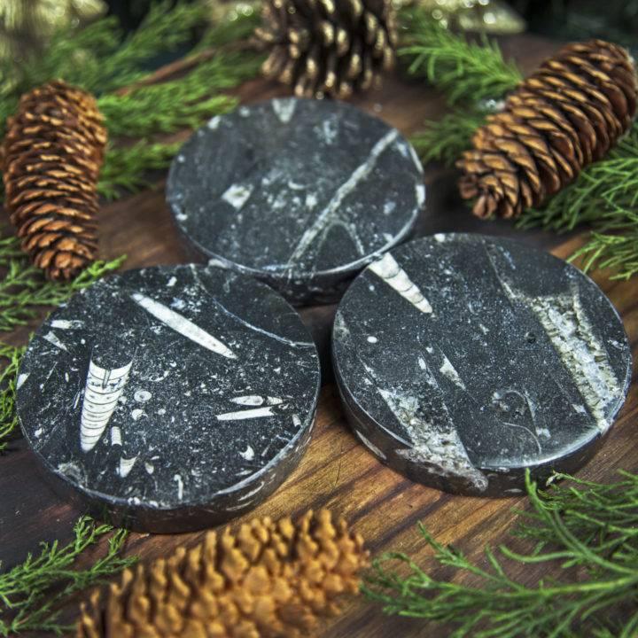 Orthoceras Ancient Earth Wisdom Plates