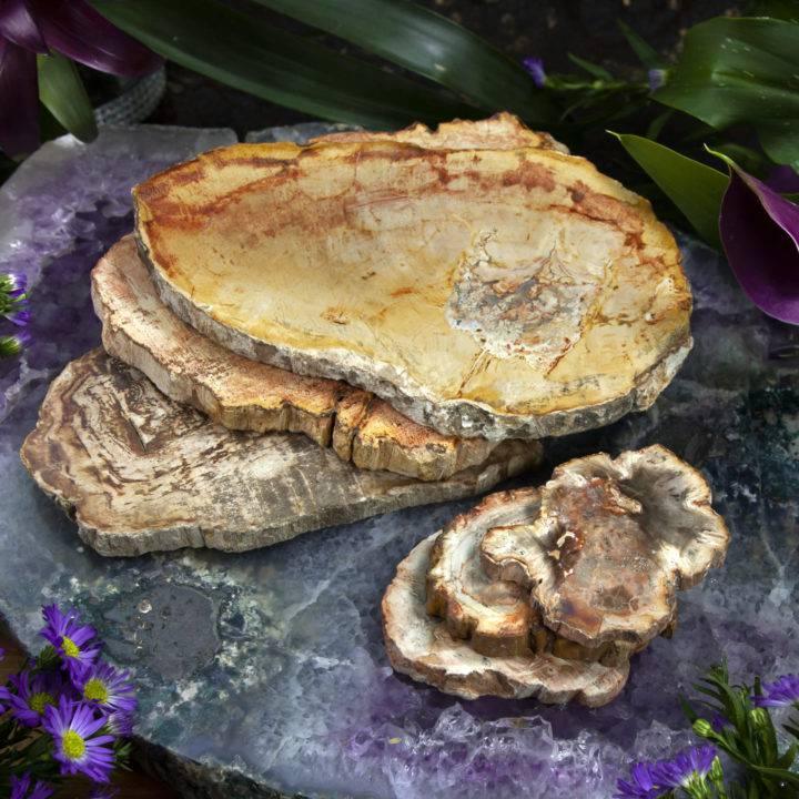 Petrified Wood Altar Plate