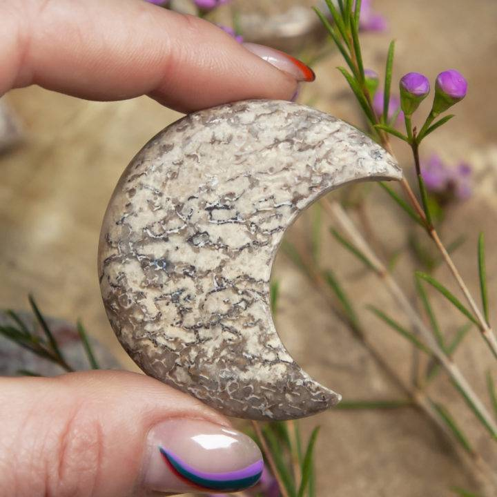 Dinosaur Bone Crescent Moon