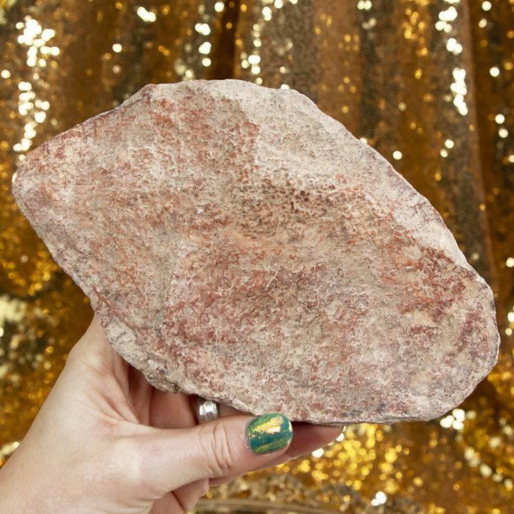 Pink Dinosaur Bone Plate