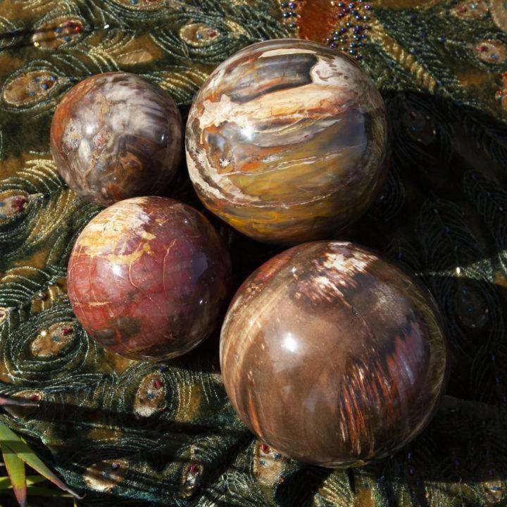 Petrified Wood Ancient Wisdom Sphere