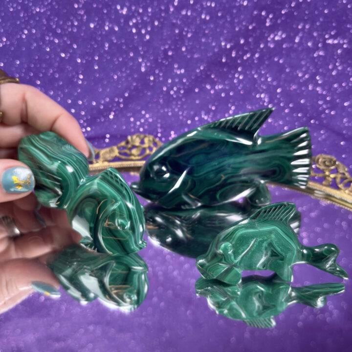 Malachite Fish
