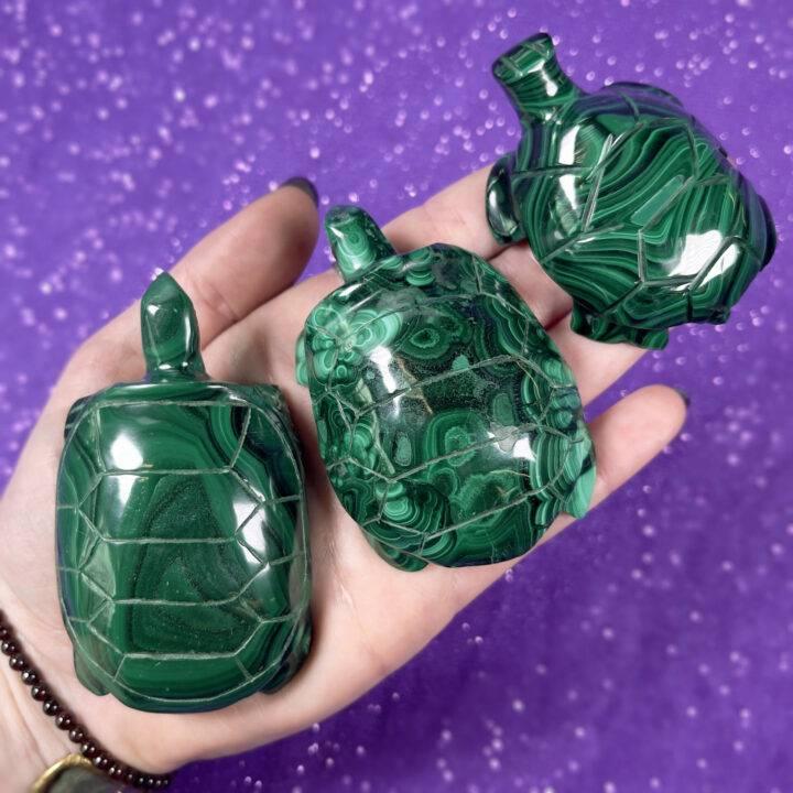 Malachite Turtle