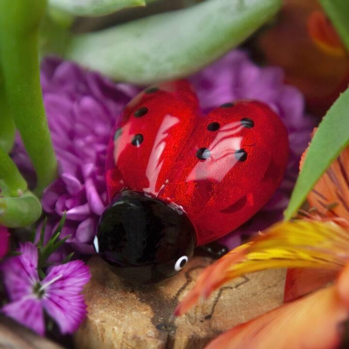 Lucky Lady Bug BeeBop