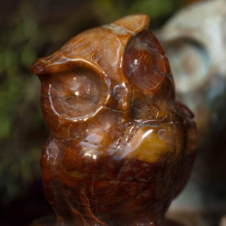 Petrified Wood Wise Owl